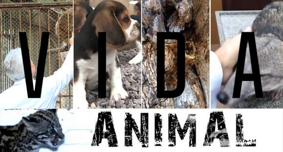 Vida animal: Zoo de Cachoeira do Sul vai receber filhote de veado