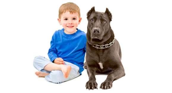 Entrevista: Segurança Cães e crianças