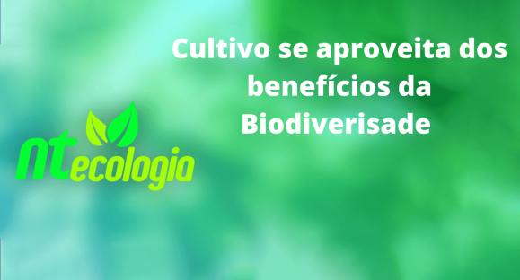 Cultivo se aproveita dos benefícios da Biodiverisade