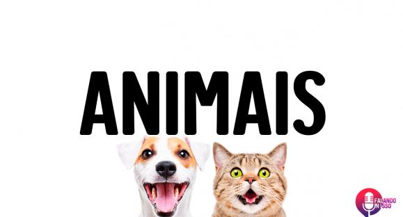 Como é sua relação com os animais?