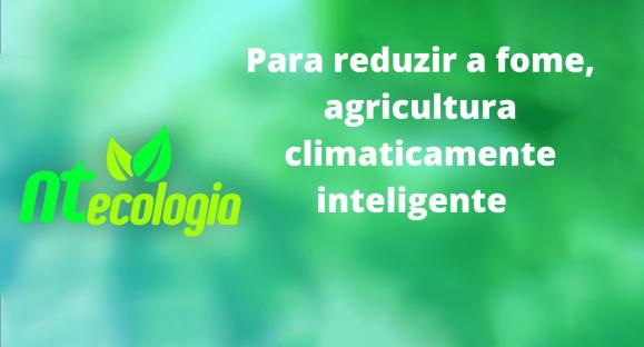 Para reduzir a fome, agricultura climaticamente inteligente