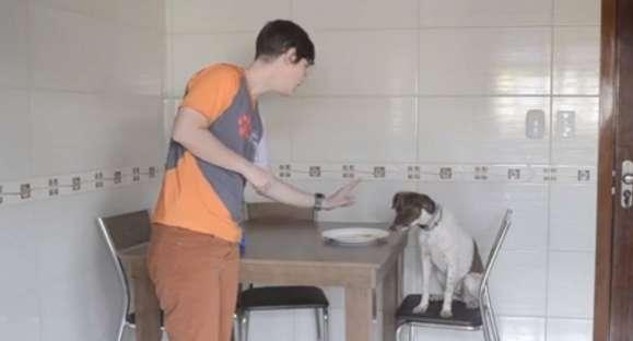 Educa Cão: como ensinar o cachorro a não fazer bagunça